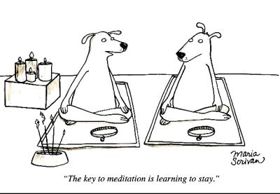 Meditation humor