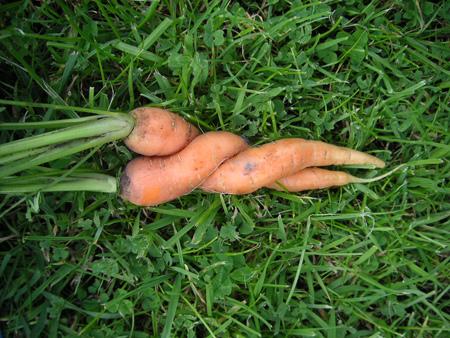 carrot-sex